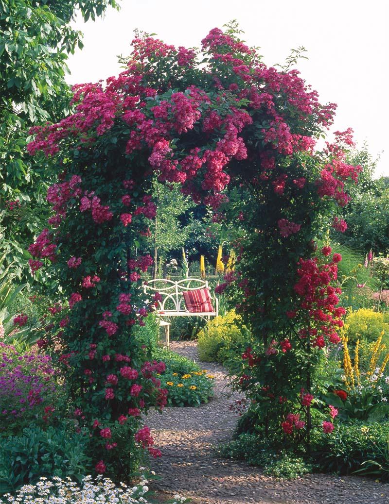 rose arches dublin classic garden elements. Black Bedroom Furniture Sets. Home Design Ideas