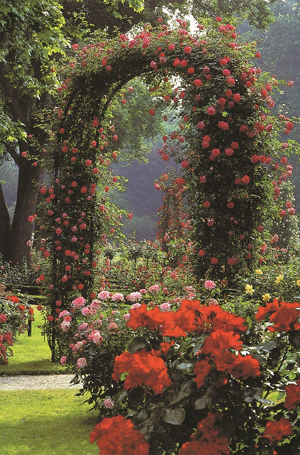 Trusted Rose Arches from Classic Garden Elements Ireland