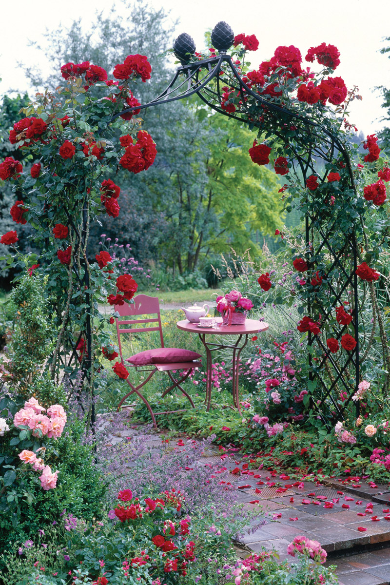Climbing Rose Supports Make Fabulous Features For Smaller