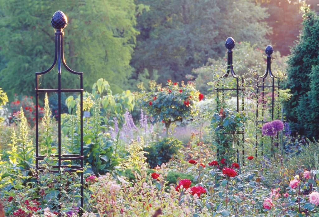 stunning climbing rose and plant displays