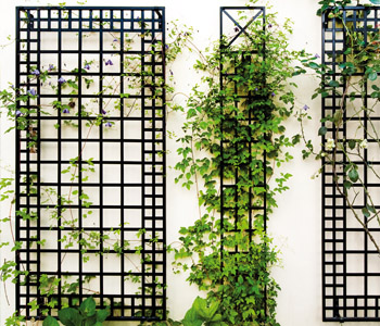 Classic Rose supports (including Garden Obelisks, Rose Arches, Wall Trellises & more).