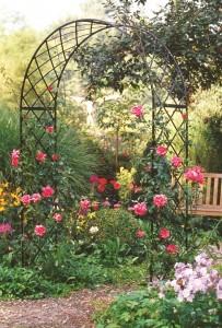 Rose Arch Roman Bagatelle