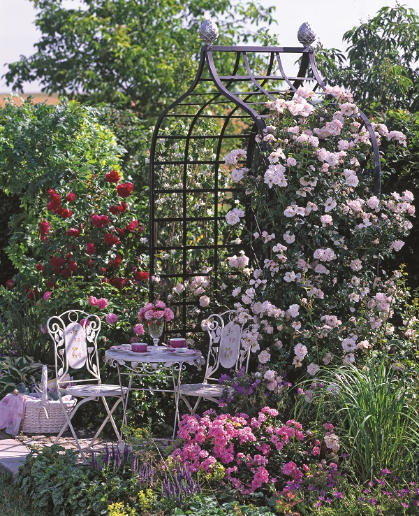 Rose and climbing plant supports